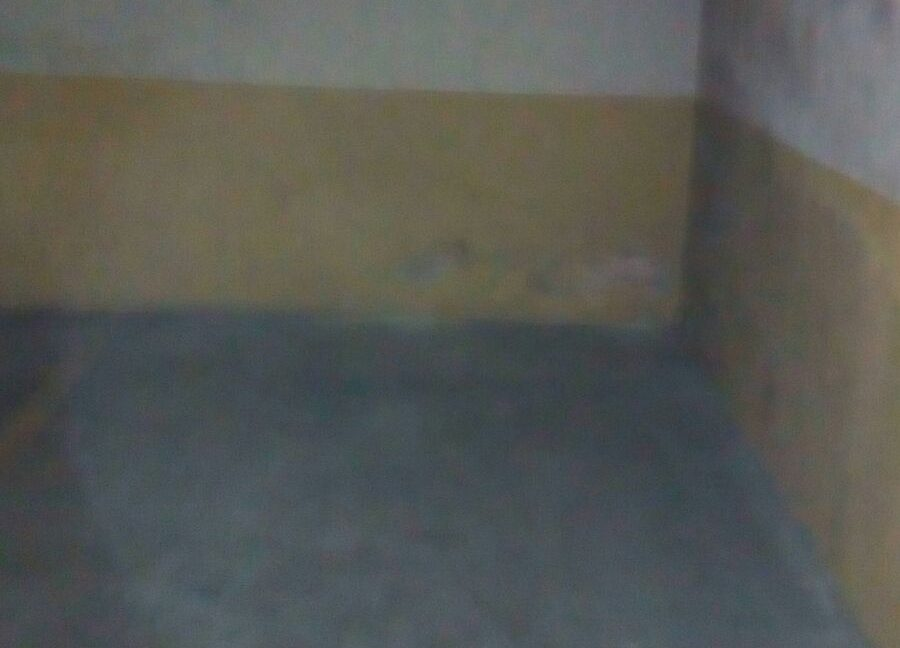Garaje verbena