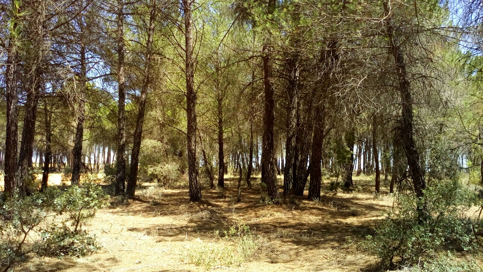 PINAR ECONÓMICO; Paraje «Las Jiras»
